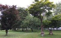 神居教会-木立の庭